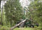 21-STM400 Stegmatare ute i skogen 07